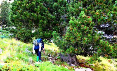 senderismo-mañana-montaña3