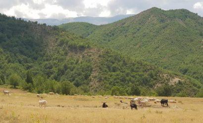 Ridning i södra Albanien14