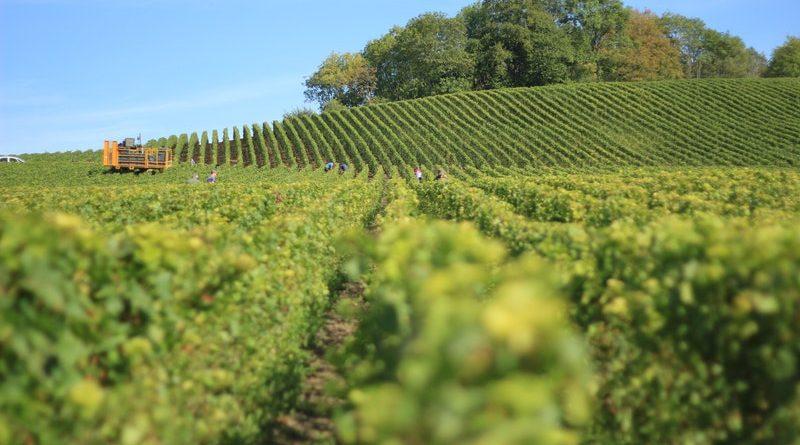 7. Hike and wine